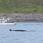 Whale Watch West Cork